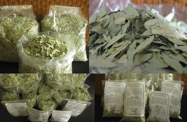 Diet alami dengan Teh daun jati Cina